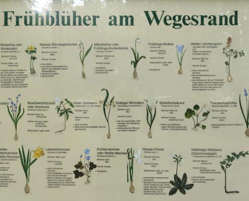 Frühblüher Konferenzdolmetscher Berlin